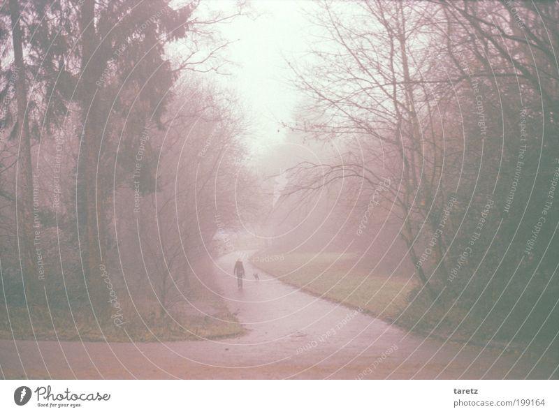Frau mit Hund Mensch rot Winter Tier Einsamkeit ruhig Erwachsene kalt Herbst Wege & Pfade Denken Park hell Nebel trist
