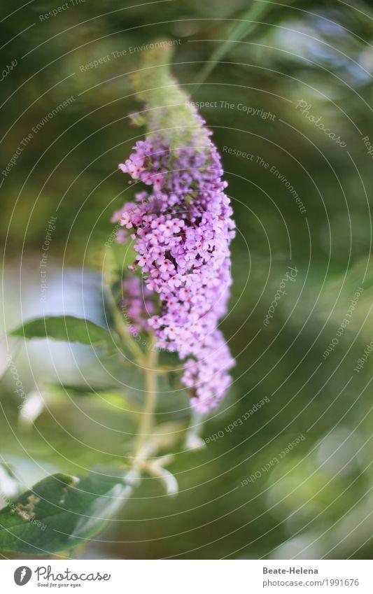 Blühende Zeiten, lieber Timmitom, Natur Pflanze schön grün Blume Blatt Leben Umwelt Blüte Frühling Garten Feste & Feiern Stimmung leuchten