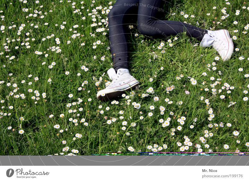 gänseblümchenlauf Joggen wandern Jugendliche Beine Fuß Umwelt Natur Frühling Sommer Pflanze Gras Garten Wiese laufen liegen rennen springen träumen Freude