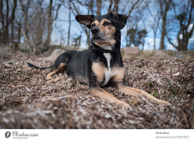 Hund auf Seegras Ferien & Urlaub & Reisen Ausflug Umwelt Natur Tier Gras Strand Blick sitzen Neugier niedlich blau braun Küste Wald beobachten Hundeblick