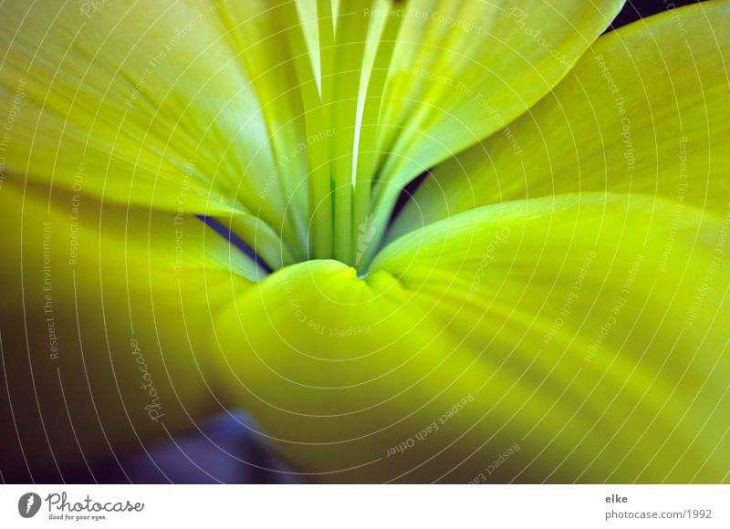 impressionen2 Natur Blume blau Pflanze gelb