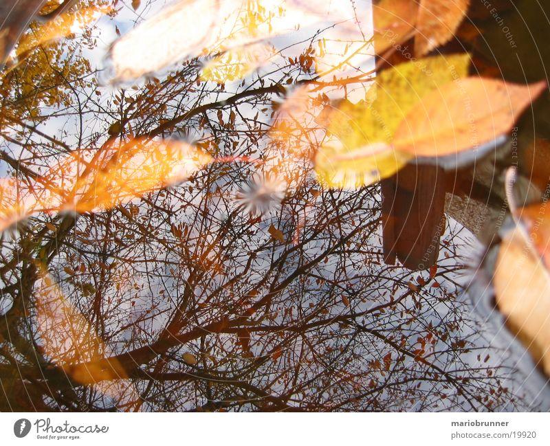 herbst_02 Blatt Herbst nass Reflexion & Spiegelung Baum gelb Wasseroberfläche herbstlich Ast Regentonne