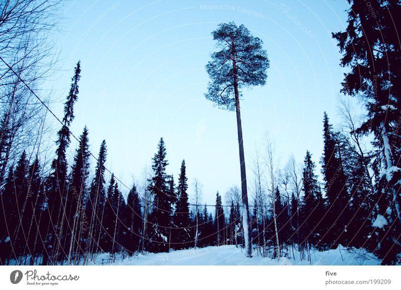 luosto XXII Himmel Natur blau Baum Pflanze Ferien & Urlaub & Reisen Winter Ferne Wald Straße kalt Schnee Freiheit Umwelt Wege & Pfade Eis