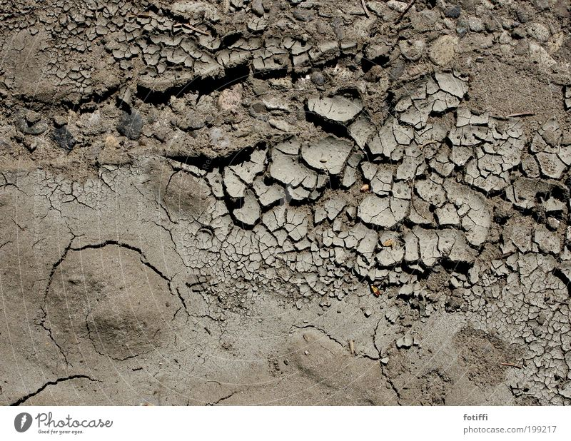Wüstenai Natur Pflanze Erde Sand Klimawandel Wärme Dürre braun geduldig ruhig Müdigkeit Durst trocken spröde geplatzt Riss dröge Lehm lechzend Erwartung