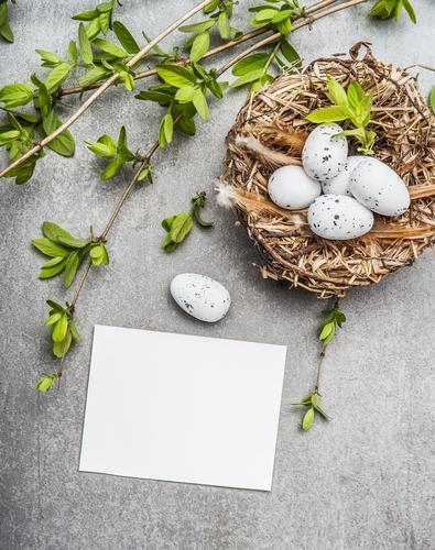 Ostereier im Nest mit Frühlingszweigen und Karte Natur Stil Feste & Feiern Design Dekoration & Verzierung Sträucher Zeichen Ostern Postkarte Symbole & Metaphern