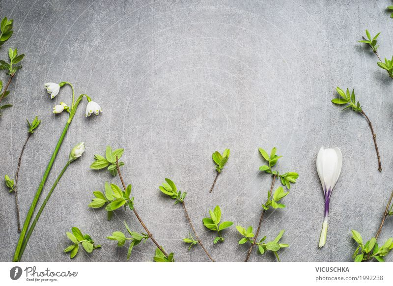 Frühling Blumen und Äste Hintergrund Stil Design Natur Pflanze Blatt Blüte Dekoration & Verzierung Blumenstrauß rein Hintergrundbild Frühlingsblume