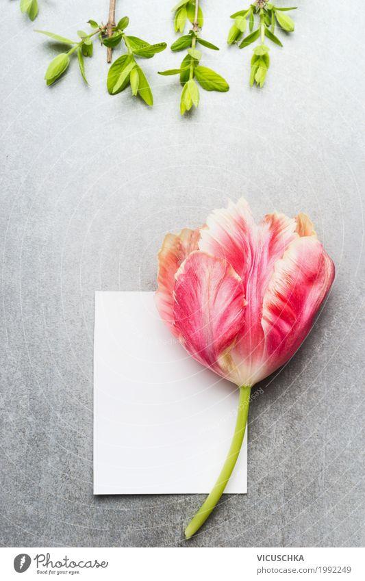 Leere weiße Karte mit Tulpe Natur Pflanze Sommer Blatt Lifestyle Blüte Frühling Liebe Gefühle Hintergrundbild Stil Garten Feste & Feiern Design rosa Geburtstag