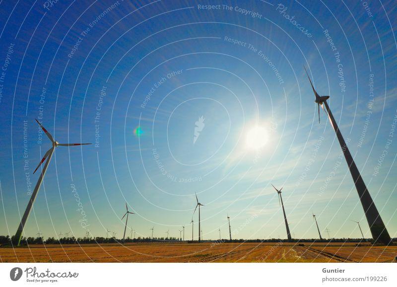 high-performance trees Landschaft Klima Klimawandel blau gold grün schwarz silber Zukunftsorientiert Erneuerbare Energie Windkraftanlage Energiewirtschaft