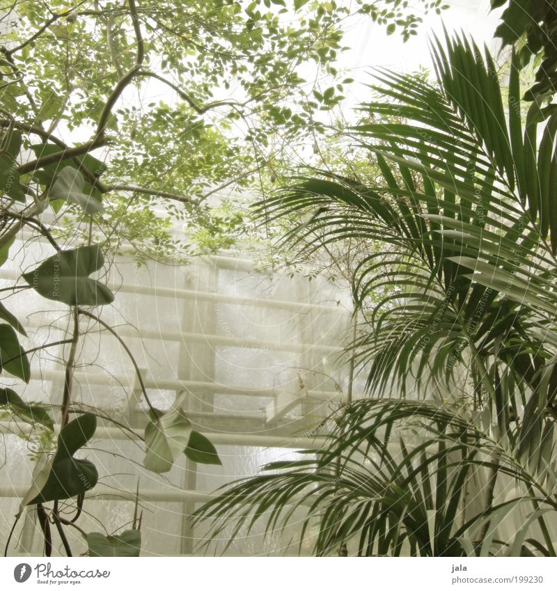 botanic garden [LUsertreffen 04|10] Natur Baum Blume Pflanze Blatt Fenster Garten Gebäude Wärme groß Landwirtschaft Bauwerk feucht Forstwirtschaft Grünpflanze