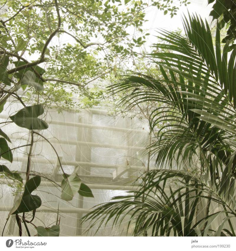 botanic garden [LUsertreffen 04|10] Natur Baum Blume Pflanze Blatt Fenster Garten Gebäude Wärme groß Landwirtschaft Bauwerk feucht Forstwirtschaft Grünpflanze Wildpflanze