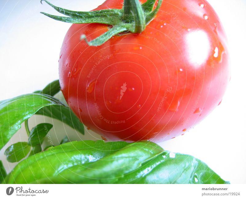 tomate_basilikum grün rot Ernährung Gesundheit Italien Kräuter & Gewürze Gemüse Tomate Vitamin Basilikum