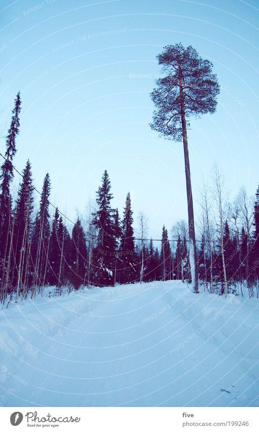 luosto XXIV Ferien & Urlaub & Reisen Tourismus Ausflug Ferne Freiheit Winter Schnee Winterurlaub Himmel Wolkenloser Himmel Pflanze Baum Sträucher Straße