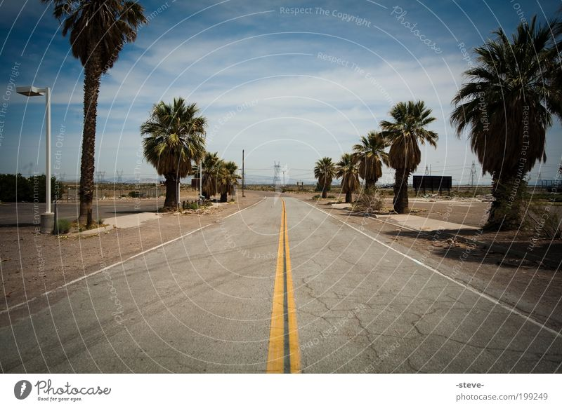 On The Road Again Natur blau Straße grau braun USA Wüste Palme Nevada Pflanze