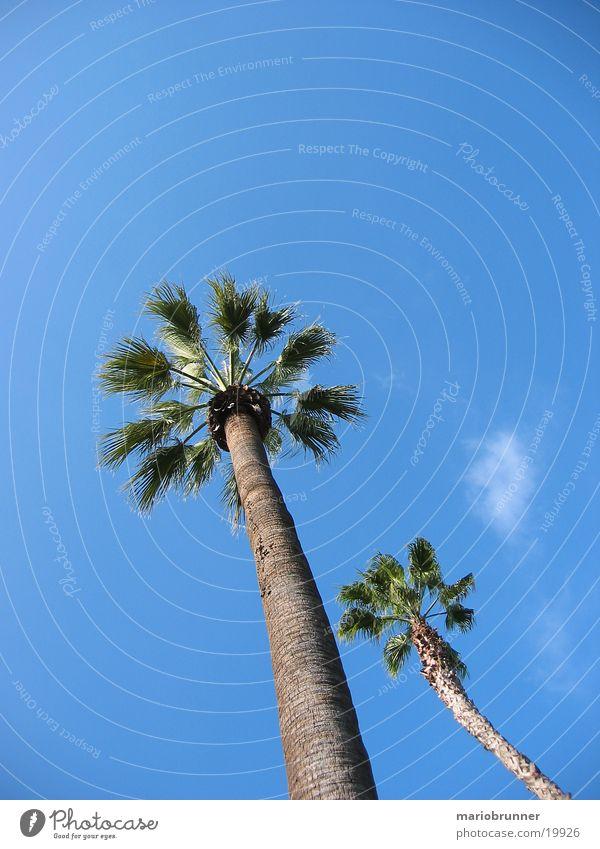 palmen Himmel Sonne blau Sommer Strand Wärme Physik Palme Kalifornien