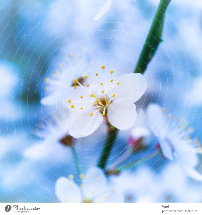 Blühende weiße Frühlingsblumen des Frühlinges Himmel Natur Pflanze blau grün Baum Landschaft Blume Blatt Umwelt Leben gelb Blüte natürlich