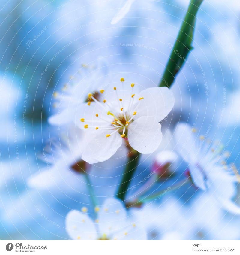 Blühende weiße Frühlingsblumen des Frühlinges Leben Garten Hochzeit Umwelt Natur Landschaft Pflanze Himmel Baum Blume Blatt Blüte Park frisch natürlich neu