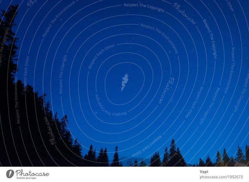 Wald unter blauem dunklem nächtlichem Himmel Natur Farbe weiß Baum Landschaft dunkel Berge u. Gebirge schwarz Freiheit hell Idylle Schönes Wetter Stern
