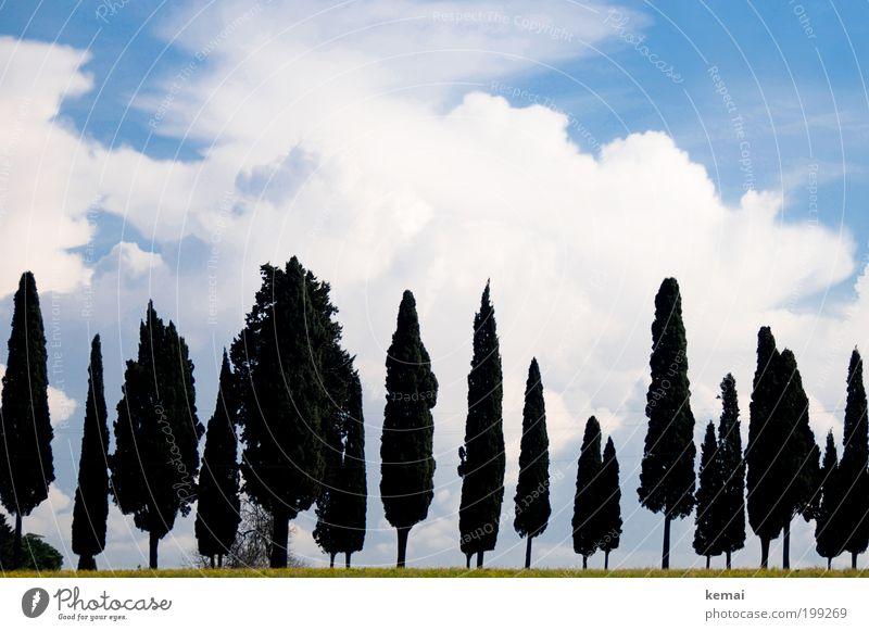 Römische Bäume Himmel Natur blau grün Baum Ferien & Urlaub & Reisen Pflanze Sonne Sommer Wolken Umwelt Landschaft Wärme Gras Garten Park