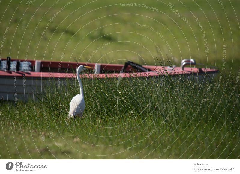 Auf und davon Natur Sommer Wasser Erholung Tier Ferne Umwelt natürlich Küste Gras Freiheit Vogel Ausflug Wildtier Schönes Wetter Abenteuer