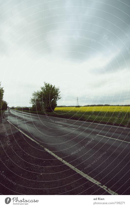 300 M.P.H Natur Himmel schlechtes Wetter Unwetter Sträucher Raps Rapsfeld Feld Straßenverkehr Autofahren Lebensraum Fahrzeug Bewegung Ferne Unendlichkeit