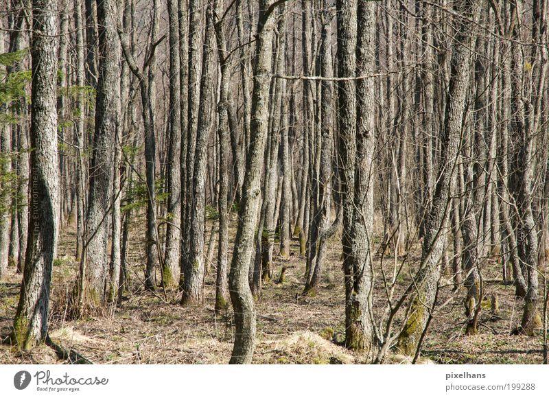 undurchsichtig Natur Landschaft Erde Klima Schönes Wetter Pflanze Baum Gras Sträucher Moos Grünpflanze Wildpflanze Wald Moor Sumpf Menschenleer Stein Sand Holz