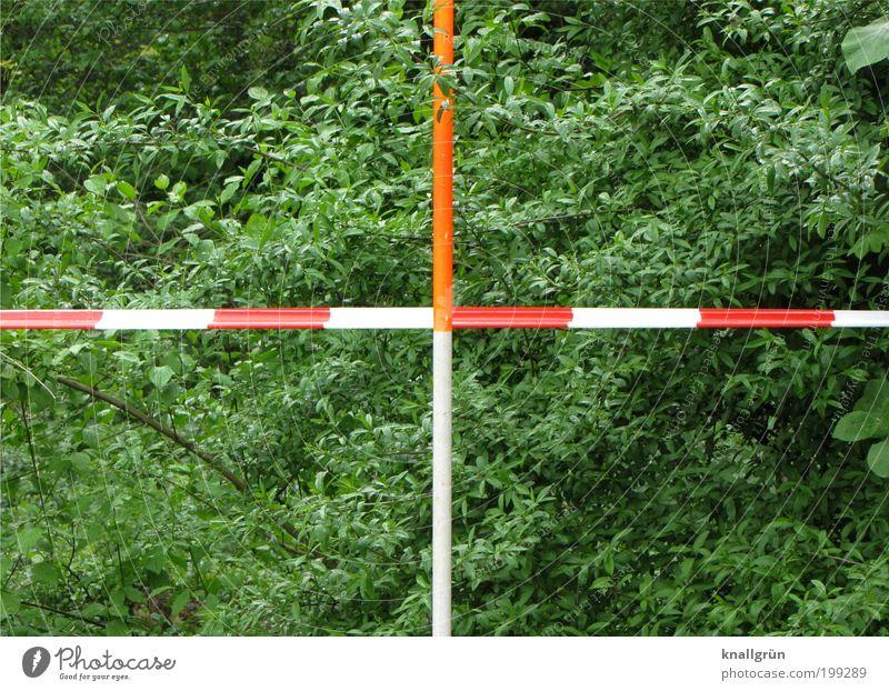 Zielkreuz Umwelt Natur Pflanze Frühling Sträucher Park Flatterband Barriere Blühend grün rot weiß Sicherheit Verantwortung Kontrolle planen Verbote Messstange