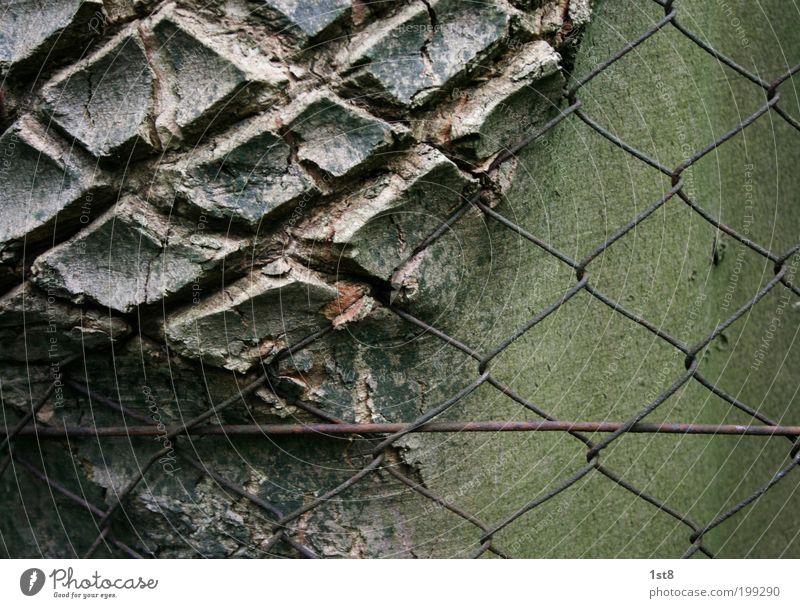 bondage Umwelt Natur Pflanze Baum Park Holz Metall Rost Netz Netzwerk alt kaputt Sympathie Zusammensein Schmerz gefräßig Hemmungslosigkeit ästhetisch Design