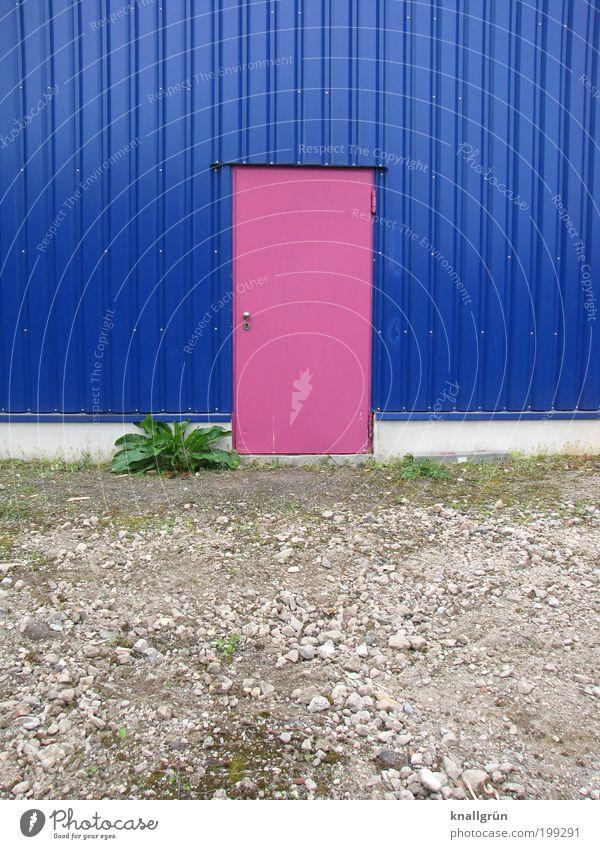Hintertür Natur Landschaft Pflanze Erde Wildpflanze Haus Gebäude Architektur Fassade Tür eckig einzigartig blau grau grün rosa weiß ästhetisch Design Farbe Idee
