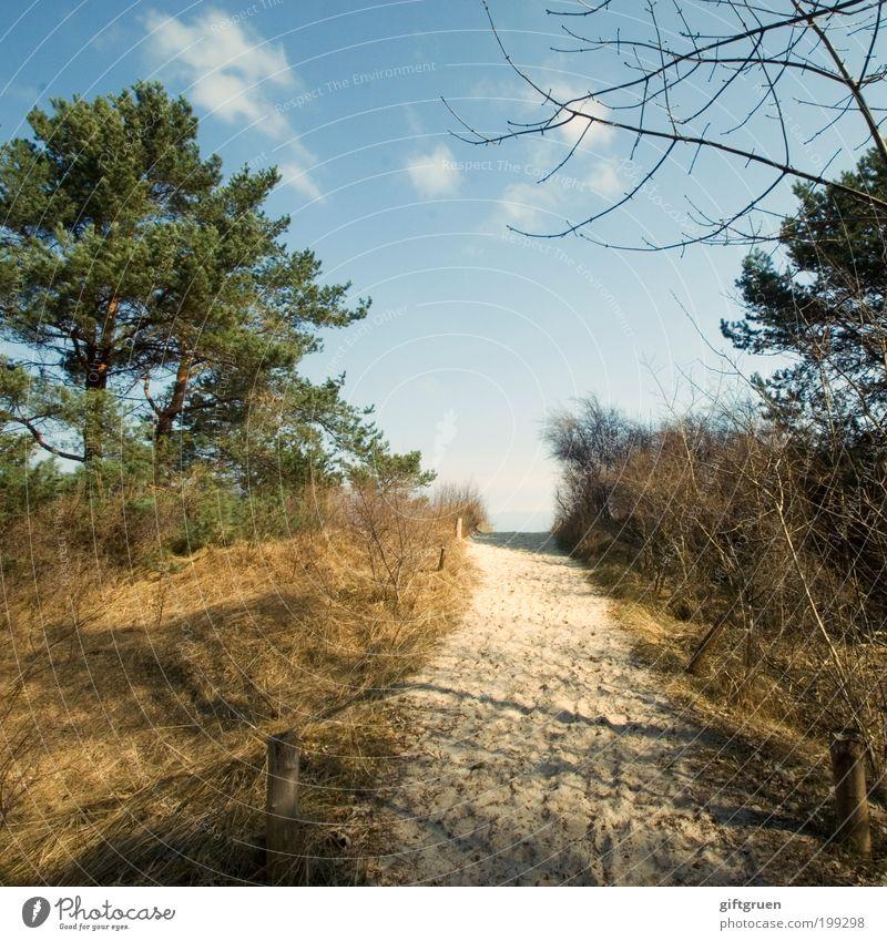 wo geht' denn hier zum strand? Natur Wasser Himmel Baum Meer Pflanze Sommer Strand Ferien & Urlaub & Reisen ruhig Gras Wege & Pfade Sand Landschaft Küste