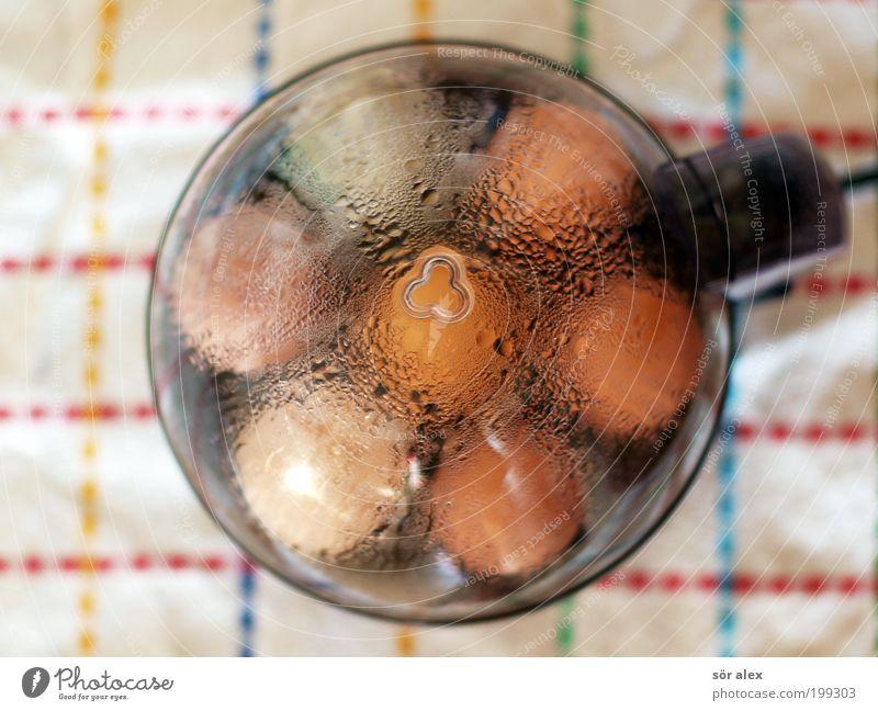 I-erkocher Lebensmittel frisch Ernährung Wassertropfen Kochen & Garen & Backen Bioprodukte heiß Frühstück Ei Stillleben ökologisch Wasserdampf biologisch Tier
