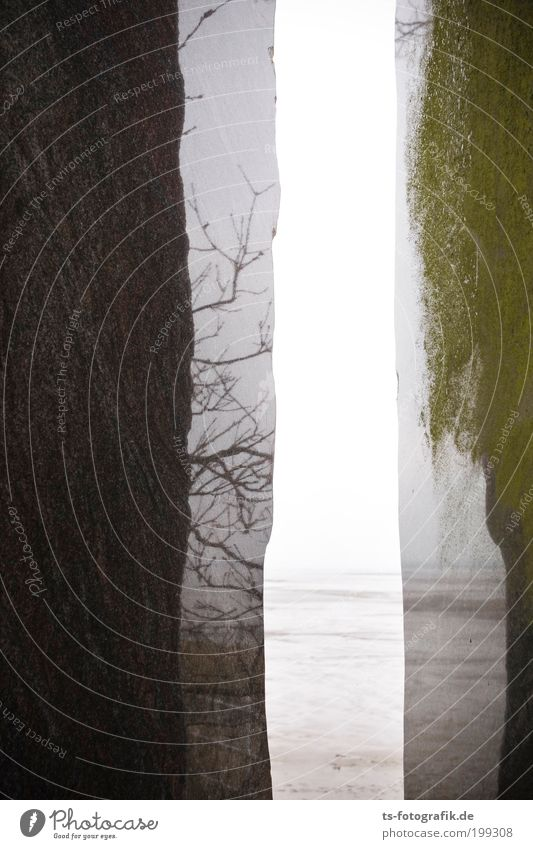 Marmor, Stein und Wattenmeer Baum Meer Sommer Strand Ferien & Urlaub & Reisen Ferne Erholung Tod Küste Trauer Tourismus Aussicht Ast abstrakt Denkmal