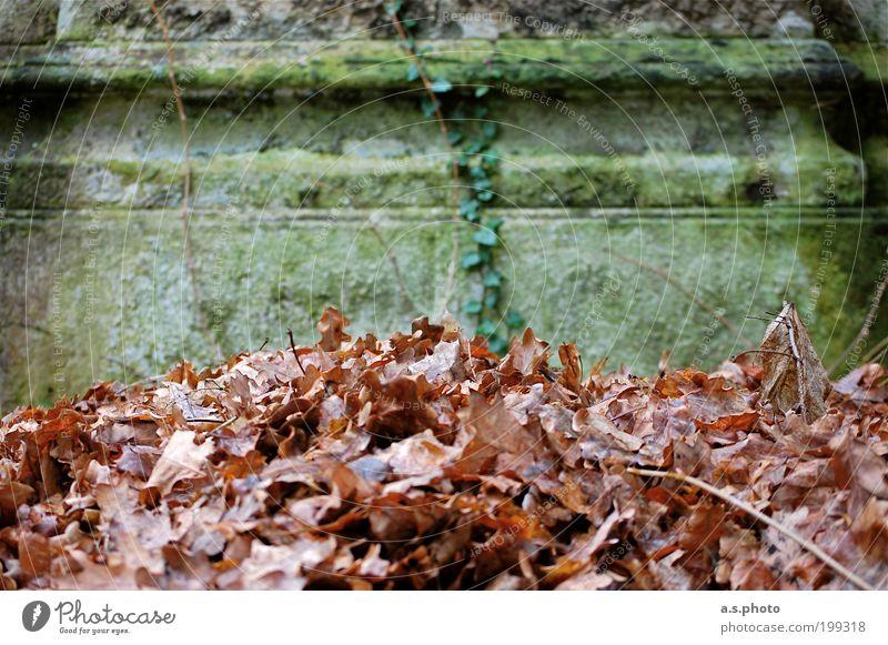 übrig Umwelt Natur Erde Herbst Wetter Pflanze Blatt Grünpflanze Garten Park Menschenleer Architektur alt natürlich unten braun grau grün ruhig Traurigkeit