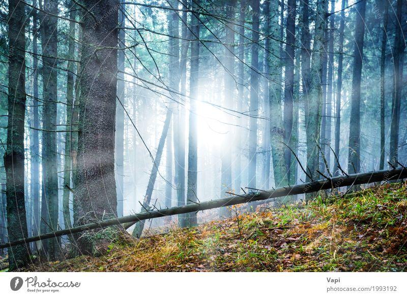 Mysteriöser Nebel im grünen Wald Abenteuer Sonne Tapete Natur Landschaft Sonnenaufgang Sonnenuntergang Sonnenlicht Frühling Sommer Herbst Wetter Baum Sträucher
