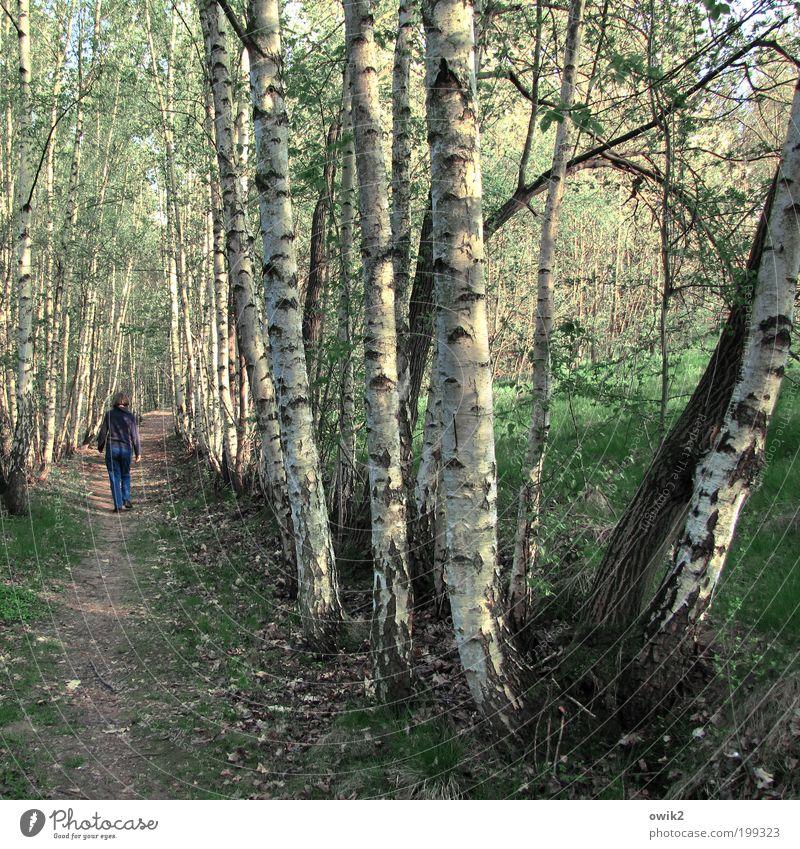 Ortstermin Mensch Frau Natur Baum Pflanze Erwachsene Umwelt Leben Landschaft Freiheit Gras Wege & Pfade Frühling Erde Wetter gehen