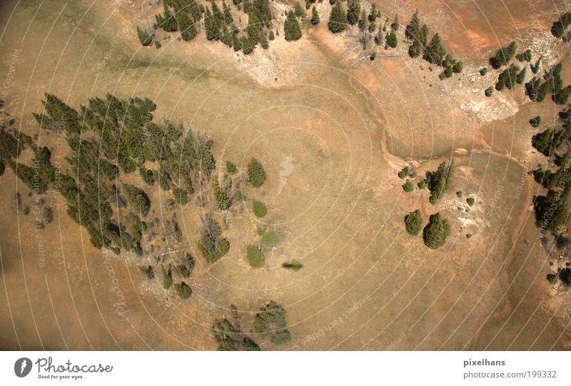 bucklige Welt Natur alt Baum Pflanze Sommer Ferien & Urlaub & Reisen Wald Freiheit Berge u. Gebirge Landschaft Umwelt Gras Holz Sand Stein Erde