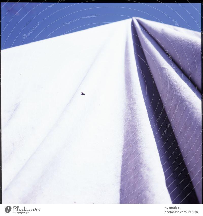 mit Fliege Himmel blau Sommer Tier Umwelt Stil Kunst Arbeit & Erwerbstätigkeit ästhetisch Luftverkehr außergewöhnlich Stoff Falte geheimnisvoll Zeichen Insekt