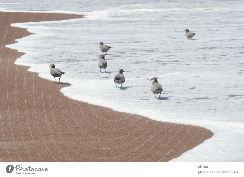 Strandspaziergang Natur Wasser Meer Ferien & Urlaub & Reisen ruhig Tier Erholung Sand Landschaft Zufriedenheit Stimmung Vogel Küste nass Sicherheit