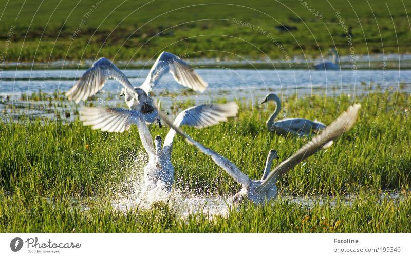 Aufbruch Umwelt Natur Landschaft Pflanze Tier Urelemente Erde Luft Wasser Frühling Sommer Klima Wetter Schönes Wetter Wärme Gras Sträucher Park Seeufer Teich