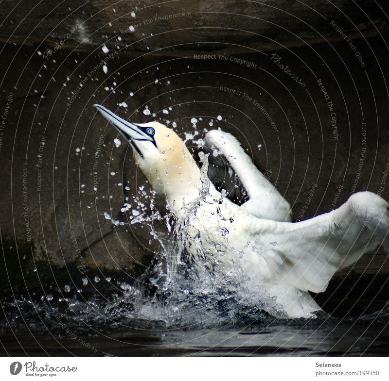 Wir brauchen Bass. Tölpel. Natur Wasser Sonne Sommer Ferien & Urlaub & Reisen Tier dunkel kalt Bewegung See Kraft Wassertropfen frei Geschwindigkeit Ausflug