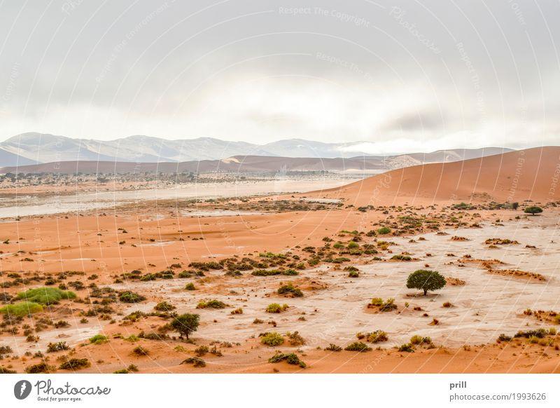 landscape in Namibia Tourismus Safari Expedition Berge u. Gebirge Natur Landschaft Pflanze Sand Wärme Gras Sträucher Hügel Wüste trocken Idylle Umweltschutz