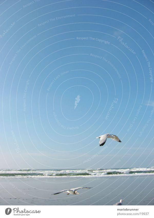 möwen Möwe Meeresvogel Strand Wellen San Francisco Vogel Sand Himmel Sonne fliegen Luftverkehr
