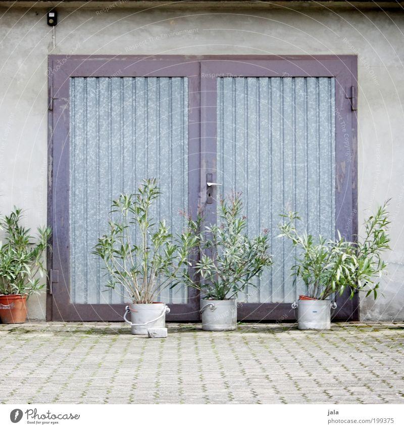 Somewhere in the Nachbarschaft grün Pflanze Haus Wand grau Mauer Gebäude Tür Fassade Platz einfach Grünpflanze Topfpflanze