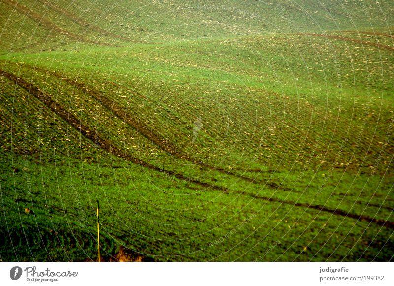 Acker Umwelt Natur Landschaft Pflanze Erde Nutzpflanze Hügel Wellen Wachstum ästhetisch natürlich weich grün Bewegung Ackerbau Feld Spurrinne Landleben Farbfoto