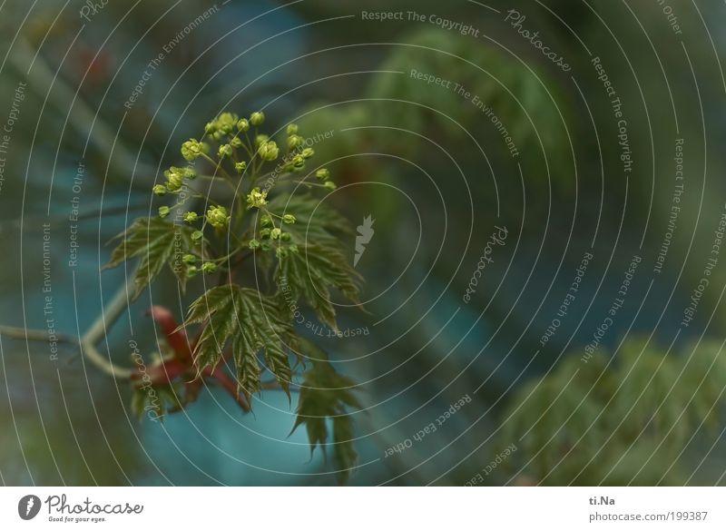 A horn Natur Baum grün blau Pflanze rot gelb Blüte Frühling Garten Park Landschaft Umwelt ästhetisch Wachstum Klima