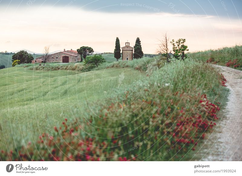 Vitaleta Kapelle, Val d'Orcia, Toskana, Italy Himmel Natur Ferien & Urlaub & Reisen Pflanze Sommer Landschaft Blume Haus Umwelt Wege & Pfade Wiese Gras