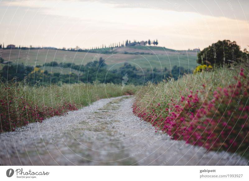 der Weg und sein Ziel sportlich Ferien & Urlaub & Reisen Tourismus Ausflug Ferne Zufriedenheit Glück ruhig wandern Wege & Pfade gehen Hügel Landschaft Heide