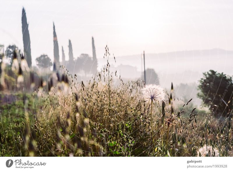toscana Himmel Natur Ferien & Urlaub & Reisen Pflanze Sommer Sonne Landschaft Blume Erholung ruhig Ferne Umwelt Wiese Gras Glück Tourismus