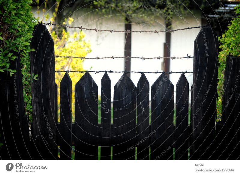 Nachbars geheimnisvoller Garten Natur alt grün Pflanze schwarz gelb dunkel Erholung Garten Holz grau Metall Angst Fassade Lifestyle