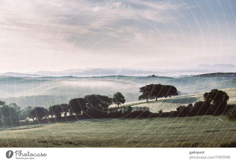 Morgenfrische Umwelt Natur Landschaft Pflanze Erde Luft Himmel Horizont Sommer Wetter Schönes Wetter Baum Wiese Feld Hügel Toskana Italien frei Freundlichkeit