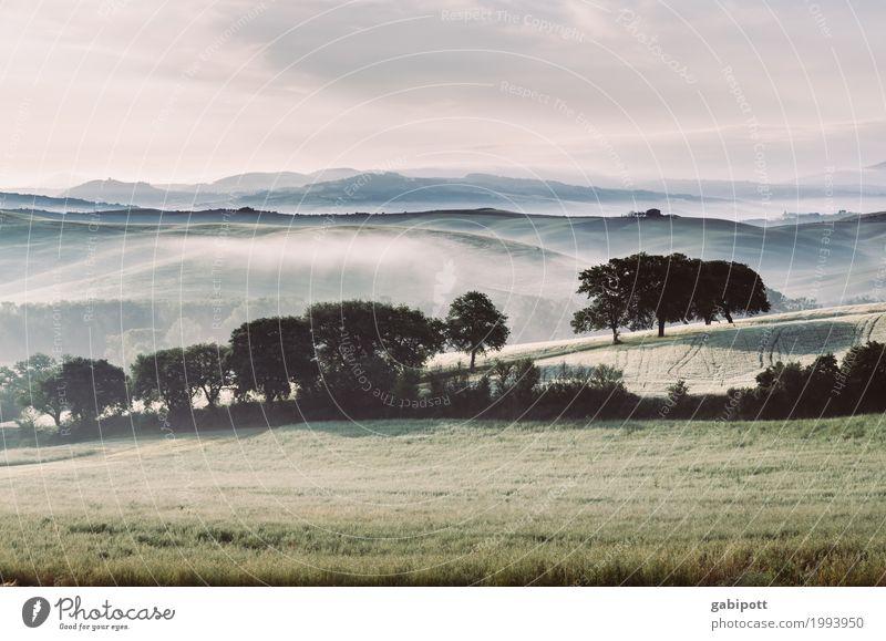Morgenfrische Umwelt Natur Landschaft Pflanze Urelemente Erde Luft Horizont Sommer Schönes Wetter Nebel Baum Wiese Feld Hügel Italien Toskana frei natürlich